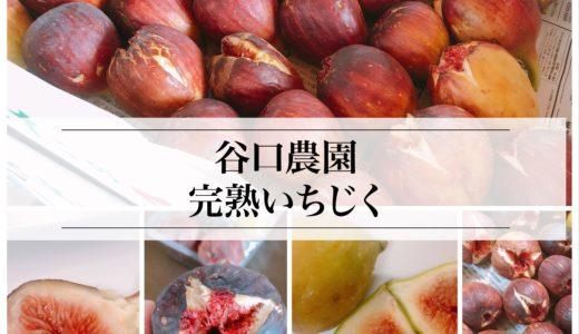 尾張旭市のイチジク直売所「谷口農園」の完熟イチジクの加工用が3kg1500円とお得!