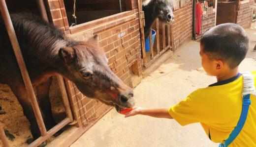 子供とお出かけ「愛知牧場」で馬に乗ったり乳しぼり体験!