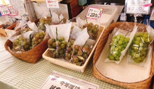 大府ぶどう直売所『サグワットファーマーズ』の黄華ぶどうが美味しい!