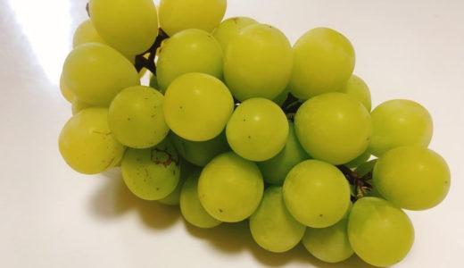 【保存版】シャインマスカットの保存方法!果物のプロが、冷蔵・冷凍保存をご紹介!