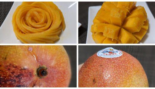 濃厚な甘さ!ヴィーナスマンゴー(メキシコマンゴー)の切り方、食べ方を紹介!バラの作り方も!