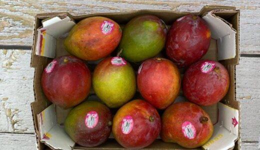 【2021年】コストコ マンゴー!メキシコ産トミー種は甘味が強く繊維が多め