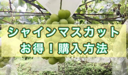 【果物のプロ解説】シャインマスカットの値段は?お得に購入する方法!